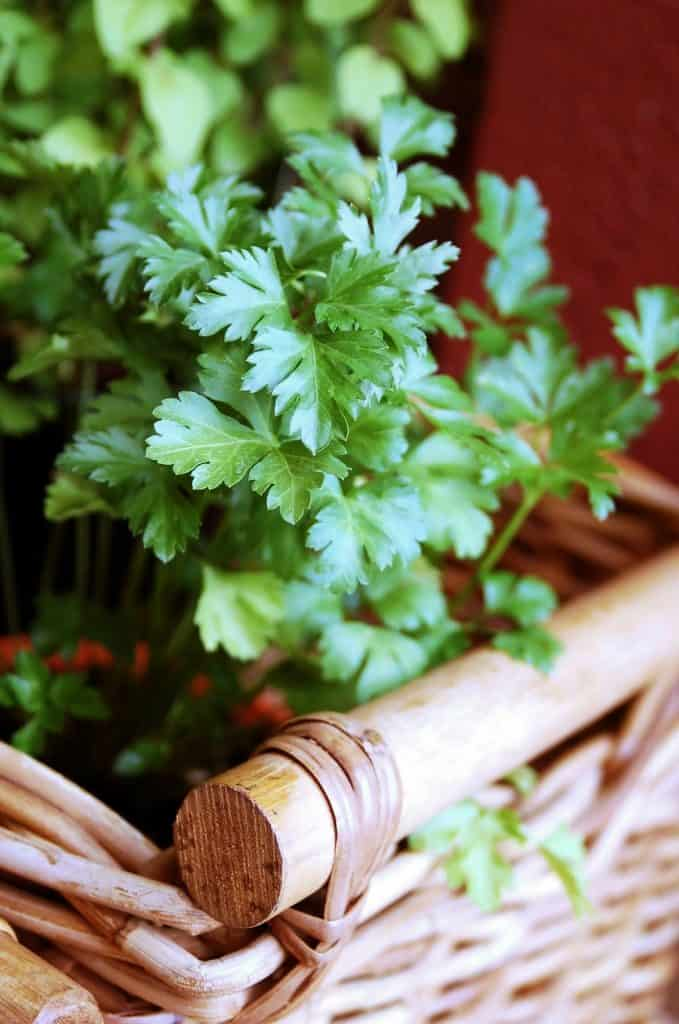 Our Top 12 Favorite Healthy Green Leafy Vegetables