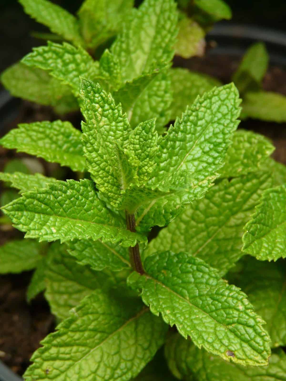 7 Common Herbs to Make Your Healthy Meals Even More Flavorful