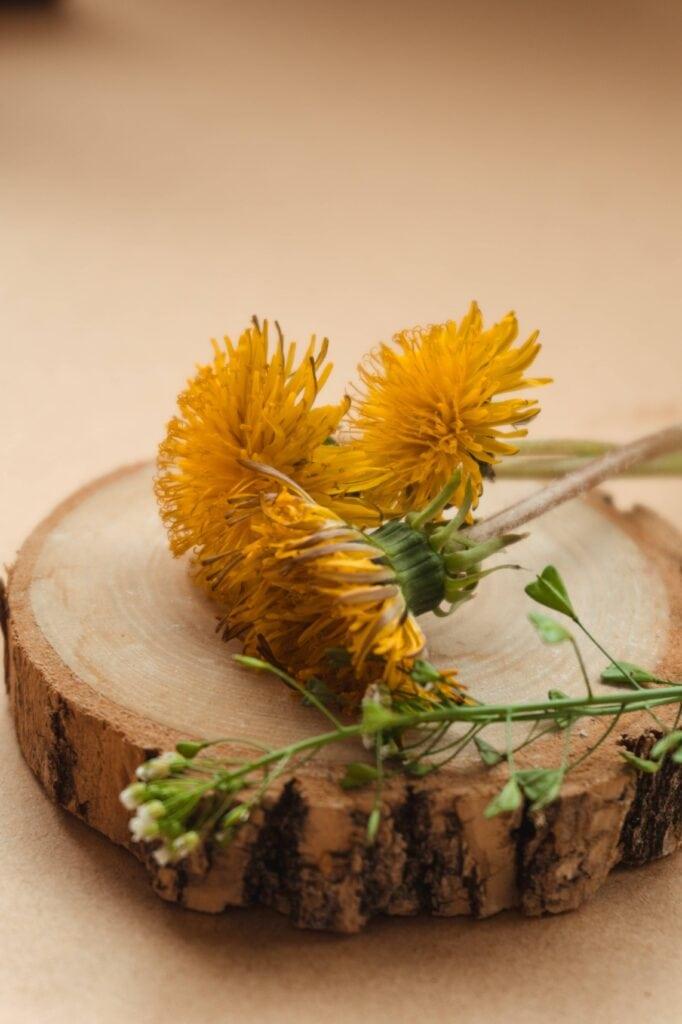 dandelion for detoxification